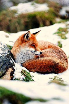Warm wishes via Flickr