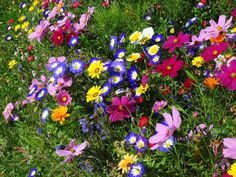 Make it a meadow - let your garden grow wild and wait for the natural magic to happen - Independent.ie Annual Flowers, Wildflower Seeds, Planting Bulbs, Day Lilies, Live Plants, Perennials, Outdoor Gardens, Wild Flowers, Orchids