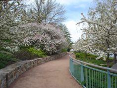 Chicago Botanical Gardens in Spring. Love it.