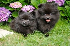 These babies just just like our Stitches did as a pup!  so cute and sweet!