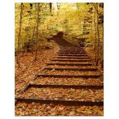 Shop for Kurt Shaffer 'Fall Stairway' Gallery-wrapped Art - Natural. Get free delivery On EVERYTHING* Overstock - Your Online Art Gallery Store! Yellow Home Accessories, Yellow Home Decor, Canvas Home, Canvas Wall Art, Canvas Prints, Fall Canvas, Stairway Gallery, Stairway Art, Yellow Wall Art
