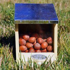 +imagine Squirrel Feeder | Wildlife Feeders | Squirrel Habitat | Nature Study