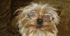 Tratamiento no quirúrgico para las cataratas en los perros. Las cataratas resultan por una ruptura en el tejido del cristalino del ojo del perro. Las fibras del cristalino se desalinean, lo cual lo opaca. La cirugía es el tratamiento preferido para las cataratas. Los tratamientos no quirúrgicos pueden mejorarlas sin el riesgo y costo de la cirugía.