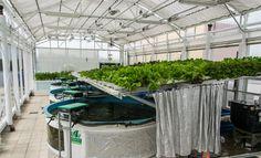 Green-Sky-Growers---NFT-Rack