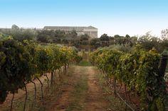 Viñedos Cigarral Santa María es uno de los 4 únicos viñedos urbanos del mundo, y el más grande de España. Un lugar perfecto para el día más especial de tu vida.