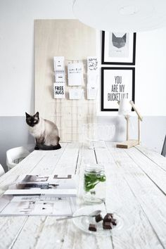 This is so my future: all white room with a Himalayan cat = perfection!