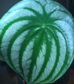 Watermelon Peperomia #houseplants have leaves that look like a watermelon. http://www.houseplant411.com/askjudy/help-iding-a-houseplant