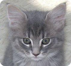 Meow! My name is Keni