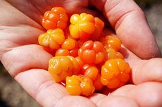 Health Benefits of Consuming Cloudberries