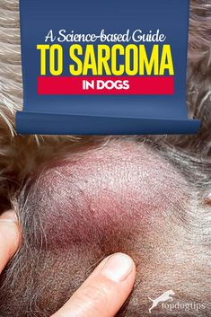 Sarcoma in Dogs: A Science-based Guide (Types, Treatments, Survival) Types Of Tumors, Types Of Cancers, Types Of Bones, Mammary Gland, Nasal Cavity, Dog Health Tips, Radiation Therapy, Type Treatments