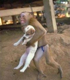 During a dangerous factory explosion that occurred in China, a Monkey was recorded on the camera saving a puppy from the explosion site. He held the dog as he ran out of the factory. If animals can instinctively show compassion and kindness to each other why can't we humans beings do so?