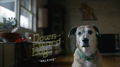 "Casting Featured Extras in Pittsburgh for New ABC TV Show ""Downward Dog"""