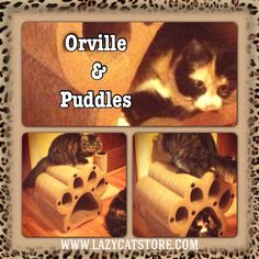 Orville & Puddles hanging out on their favorite Lazy Cat piece.  Available @ lazycatstore.com Lazy Cat, Pet Furniture, Hanging Out, Pets