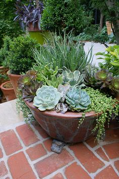 Potted succulent garden DIY Garden Yard Art When growing your own lawn yard art, recycled and up cyc Succulent Gardening, Succulent Pots, Cacti And Succulents, Planting Succulents, Planting Flowers, Succulent Display, Cactus Plants, Tiny Cactus, Kitchen Gardening