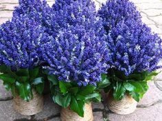 Staff Picks - Pixdaus | lavendel tree By: nida