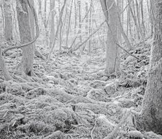 Photographer Tomasz Lazar asks us to envision the final walk of those who have died in Aokigahara forest—as well as the spirits that remain.