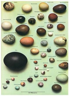 Bird egg identification charts from Scientific Illustration and Data Deluge