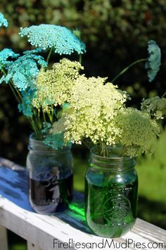 Coloring Wild Carrot flowers in mason jars, could be a science experiment or a practical life activity, from the Fireflies and Mud Pies blog.