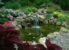 you can t ask for a better location for a pond and stream, landscaping, outdoor living, ponds water features, 11 x 16 Koi pond right next to the main patio and within view from the the kitchen window More info on this project Diy Water Feature, Backyard Water Feature, Ponds Backyard, Backyard Ideas, Garden Ponds, Koi Ponds, Backyard Designs, Pond Landscaping, Landscaping With Rocks