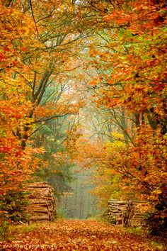 Forest road in autumn (Netherlands) by dewollewei