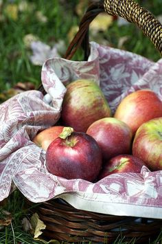 I have a crazy obsession with Pink Lady apples! Someday I plan to retire on an apple orchard. Apple Harvest, Harvest Time, Fall Harvest, Harvest Season, Apple Tree, Red Apple, Pink Lady Apples, Apple Baskets, Apple Season