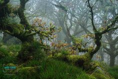 Photograph The Haunted Wood by Andy Farrer on 500px
