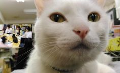 Company Adopts Rescue Cats to Help Employees Unwind and Improve Productivity - Love Meow