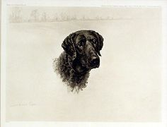 Maud Earl, Serving the Guns, 1902. Curly Coated Retriever Ch. Preston Rattler.