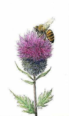 Heinsohn - Bee and Thistle Vino Chardonnay, Watercolor Flowers, Watercolor Paintings, Watercolours, Scottish Thistle Tattoo, Natur Tattoos, Dark Drawings, Bee On Flower, Bee Art