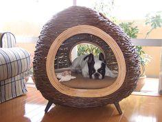 French Bulldog Chikuwa in Dog Villa