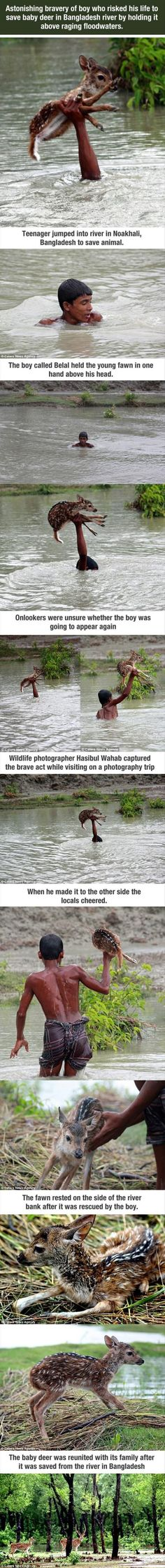 Young boy rescus a deer who's certain to drown in flood waters... Thank you ♥ (But why didn't the photographer do more to help???)