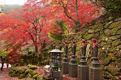 大山寺&大山阿夫利神社の紅葉 Autumn leaves in Oyamadera Temple and Afuri-jinja Shrine,Kanagawa,Japan