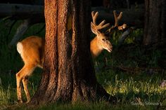 theanimalblog:  Nature Photography: Sandy Stewart