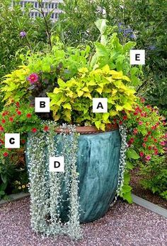 Pictures of flowers: A = Agastache, B = Dahlia, C = Calibrachoa, D = Licorice Plant, E = Salvia: Container Gardening Flowers: A = Agastache, B = Dahlia, C = Calibrachoa, D = Licorice Plant, E = Salvia  Large containers like this blue faux marbled tall