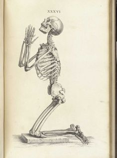 7 Fantastic Vintage Anatomy Drawings | Popular Science