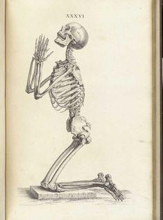 7 Fantastic Vintage Anatomy Drawings | Popular Science