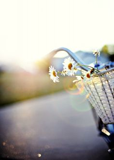 daisies on bicycle basket, lovely shot, summer