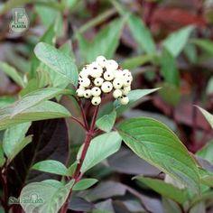 Sortiment | Splendor Plant