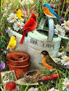 Paint by Number Junior-Bird Garden by craftitinc on Etsy Pretty Birds, Love Birds, Beautiful Birds, Image Nature, Photo Vintage, Paint By Number Kits, Cardinal Birds, Bird Pictures, Cardinal Pictures