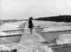 Ai mê rico Algarve!: Salinas de Ludo, 1968
