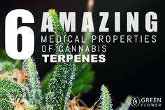 6 Amazing Medicinal Properties of Cannabis Terpenes