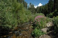 Millcreek Canyon!  Close by (in SLC) and BEAUTIFUL!  $3.00