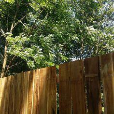akác deszka kerítés Rustic Fence, Acacia, Plank, Texture, Instagram, Wood, Vintage, Wood Fences, Surface Finish