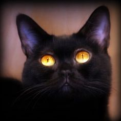 """""""A cat's eyes are windows...enabling us to see into another world"""" Irish Legend"""