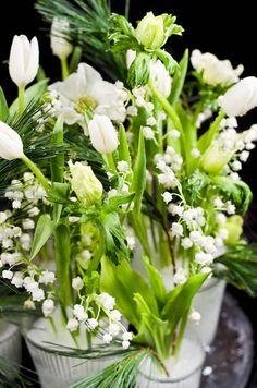 kieloja ja tulppaaneja Parsley, Celery, Herbs, Vegetables, Herb, Vegetable Recipes, Veggies, Medicinal Plants