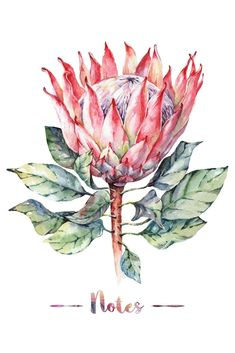 Sketches: Personalized Artist Sketchbook with Colorful Watercolor Protea Flower Design, 100 Blank Pages, x 11 in x cm), Perfect for . Notebook and Sketchbook to Draw and Journal Botanical Drawings, Botanical Art, Botanical Illustration, Watercolor Illustration, Watercolor Pictures, Watercolor Flowers, Watercolor Paintings, Protea Art, Protea Flower