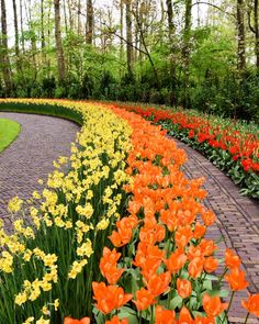 #Amsterdam #tulips by elzan8faro