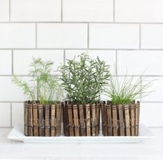 DIY Clothespin Herb Planters   Indoor Herb Garden Ideas