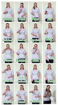Sign language for dogs...yes they can learn ASL. You teach them the same as you would with a verbal command. #signlanguageforbeginners
