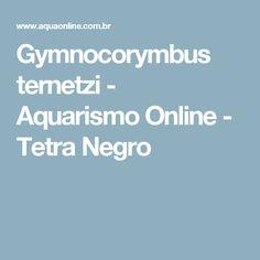 Gymnocorymbus ternetzi - Aquarismo Online - Tetra Negro